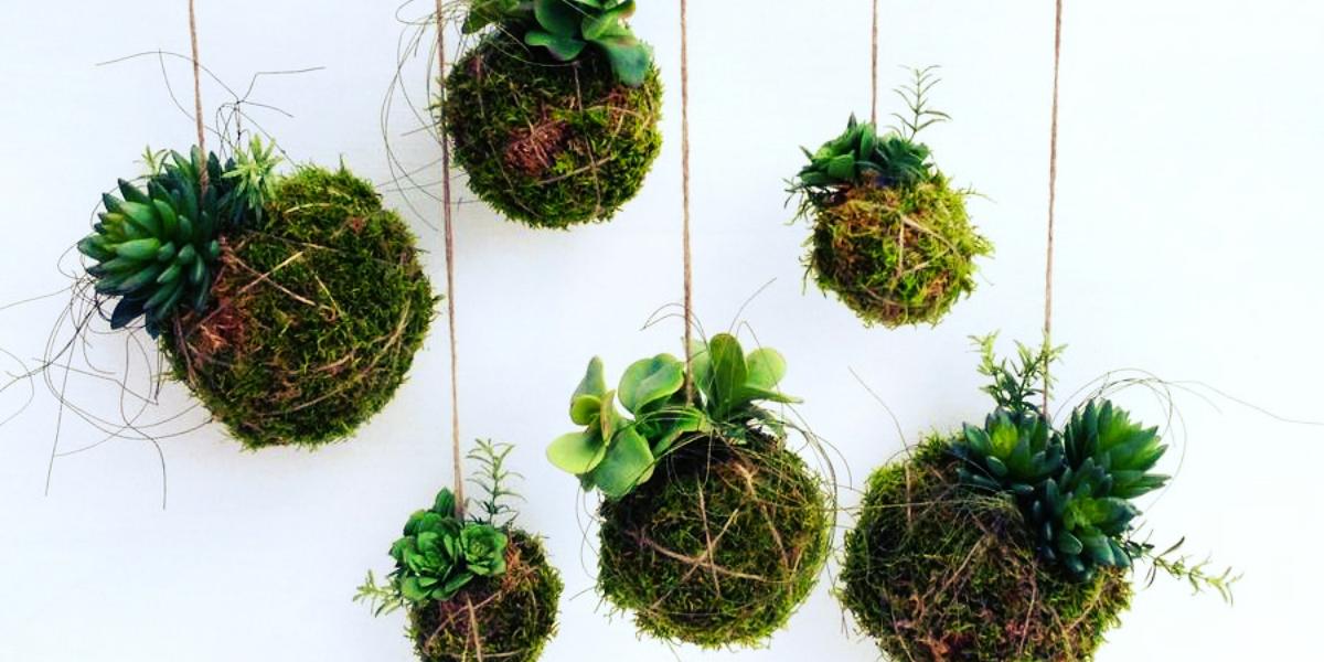 Taller en el jard n bot nico oberaonline for Jardin botanico talleres