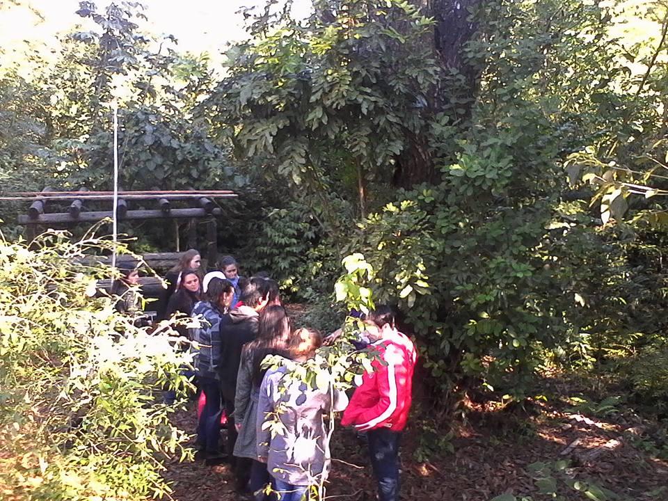Actividades conmemorando el d a del medio ambiente en el for Actividades en el jardin botanico