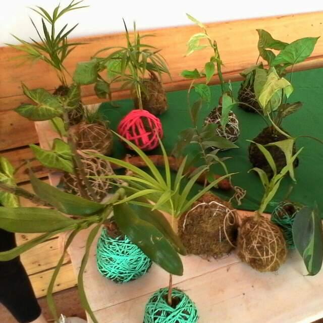 Curso de kokedama en el jard n bot nico obere o oberaonline for Jardin botanico cursos