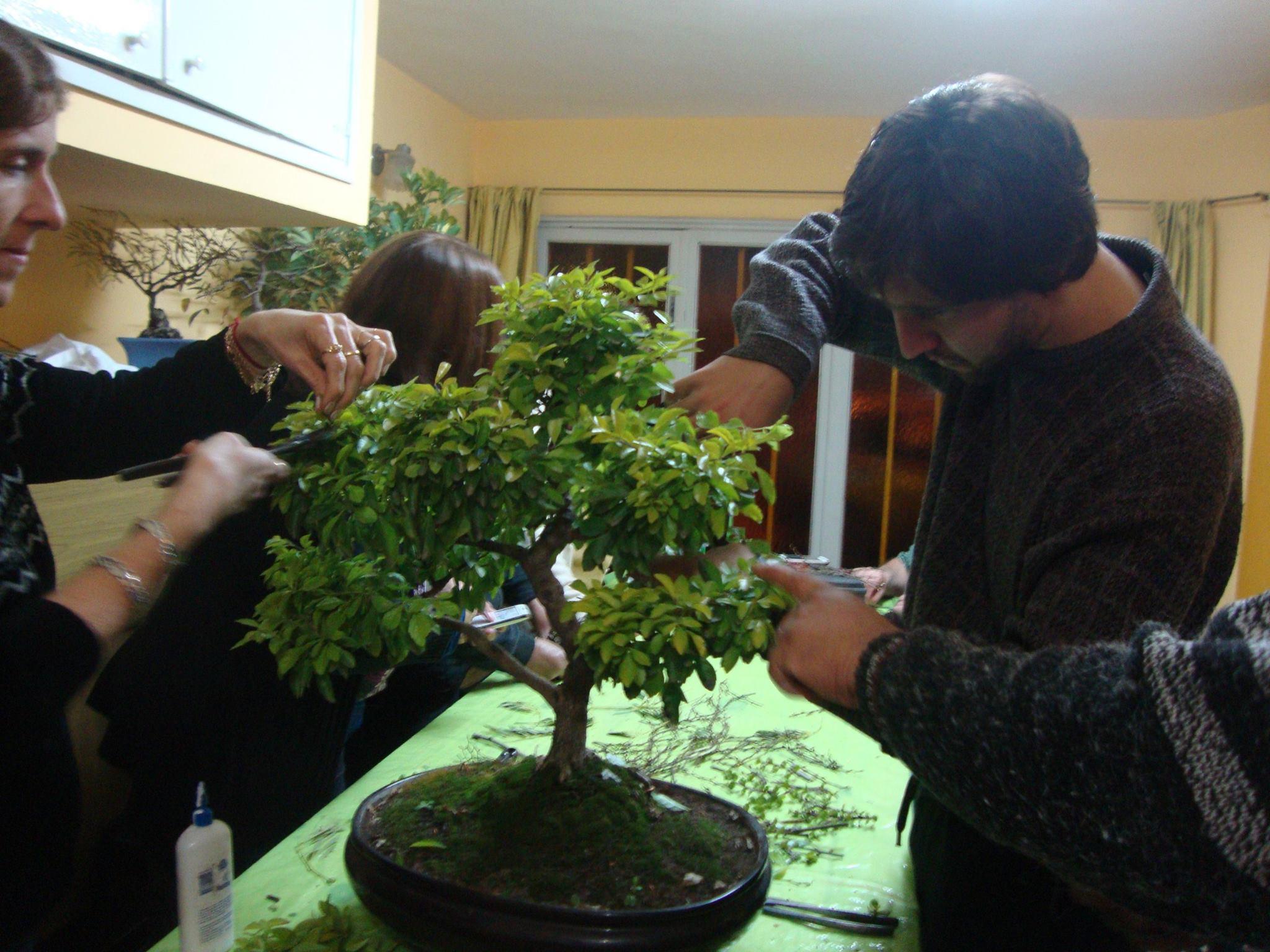 El s bado taller de bons i en el jard n bot nico obere o for Talleres jardin botanico