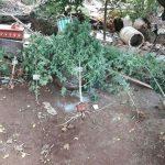 La Policía incautó plantas de marihuana en Oberá