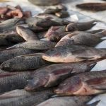 Pascuas seguras: Buenas Prácticas para el Manejo de Pescados y Mariscos