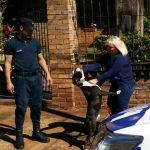 Policías recuperaron un perro robado días atrás en Oberá