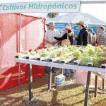 Inta Oberá realiza proyectos de acuaponía e hidroponía