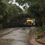Familias afectadas y caída de árboles por la tormenta
