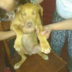 Insólito: detienen a dos jóvenes acusados de robar un perro y extorsionar a su dueña