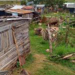 Denuncian zoofilia y ataques a animales equinos, en B° San Miguel