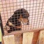 Insólito: el Concejo obereño busca regular los ladridos de los perros