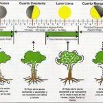 Vuelven las clases de jardinería en el Jardín Botánico