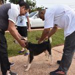 Vacunación y desparasitación de mascotas