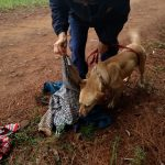 La Policía sumó canes rastreadores a la intensa búsqueda de Milton Schneider