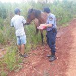 La Policía recuperó un caballo robado y busca al autor del hecho