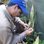 Levantamiento de Índice Rápido de Aedes
