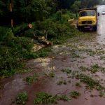 Asistencia a vecinos y trabajos por caída de árboles