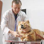 Marcos, el veterinario que atiende gratis a animales de la calle