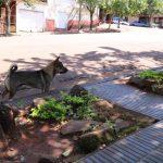 Animales en vía pública