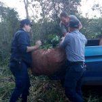 La Policía impidió el robo de 7 raídos de hojas verde de yerba mate