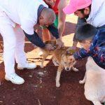 Vacunación antirrábica: 900 mascotas fueron atendidas en el año