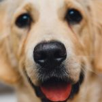 Muestreo de Universidad dice que un 22% de perros es portador de leishmaniasis en Oberá