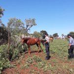 Recuperaron un caballo sustraído en Oberá
