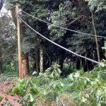 La CELO recomienda no manipular cables caídos