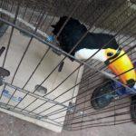 Policías rescataron un ave exótica