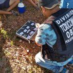 Narcomenudeo: Cayó un presunto «dealer» e incautaron marihuana en Oberá