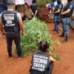 La policía realizó un procedimiento por Infracción Ley de Estupefacientes (23.737) y secuestró plantas de marihuana