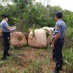Incautaron 600 kilos de yerba a punto de ser robados de una chacra