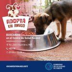 Adopción responsable de mascotas