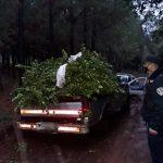 Recuperaron 600 kilogramos de yerba mate robada en Gobernador López