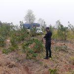 La Policía impidió el robo de hojas de yerba mate
