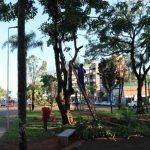 Podas correctivas en plazoletas de Avenida Sarmiento