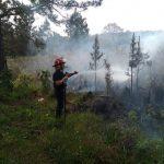 Bomberos de la Policía y Voluntarios sofocaron un incendio de malezas