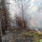 Otros tres incendios fueron sofocados en Oberá