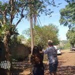 Vecino molesto por la poda indiscriminada de árboles en Oberá