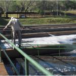 Nuevamente se ha detectado el derrame de residuos de hidrocarburos en red cloacal