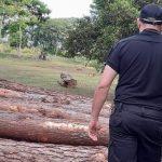 Policías incautaron rollos de pino talados ilegalmente de una propiedad privada