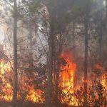 Resumen de focos de incendios en Oberá y localidades vecinas