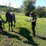 La Policía recuperó una yegua robada en el barrio San José
