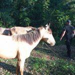 Tres caballos robados fueron recuperados por la Policía en Villa Bonita