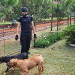 Dos pitbulls que deambulan por la vía pública, fueron resguardados y entregados a su propietaria