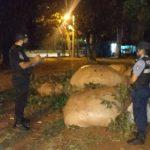 La policía recuperó 10 raídos de hojas de yerba mate robabas