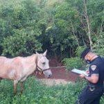 Recuperaron en Oberá un caballo sustraído en Campo Viera