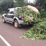 En Oberá secuestraron 400 kilos de yerba robada y detuvieron a dos hombres
