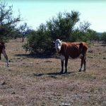 Misiones: declaran estado de emergencia agropecuaria por la sequía