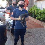 Rescataron a un gato que quedó atrapado en el techo de una vivienda