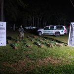 Gendarmería Nacional secuestró plantas de marihuana