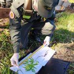 Gendarmería Nacional incautó cigarrillos, mercadería, vehículo y marihuana