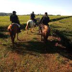 Operativo Rural en Campo Viera: 5 licencias y una motocicleta retenida en los trabajos preventivos